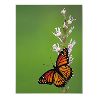 Monarch Butterfly and Flower On Green Background Photo Print