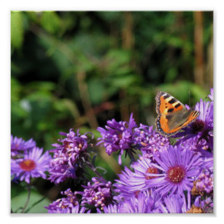 Monarch butterfly and purple flowers posters