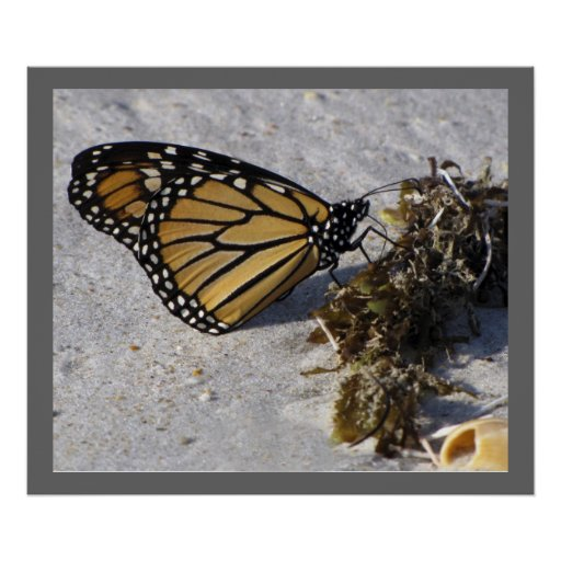 Monarch Butterfly and Seaweed, Beach Poster