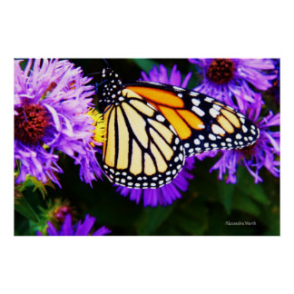 Monarch Butterfly, Aster Poster