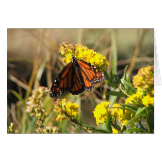 Monarch Butterfly At Rest Stationery Note Card