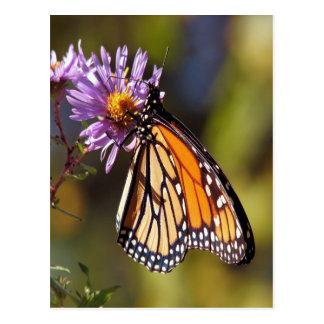 monarch butterfly beauty peace and joy postcard