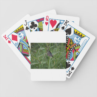 MONARCH BUTTERFLY BLUE IN RURAL AUSTRALIA DECK OF CARDS