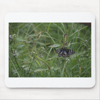 MONARCH BUTTERFLY BLUE RURAL QUEENSLAND AUSTRALIA MOUSE PAD