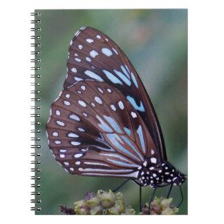 MONARCH BUTTERFLY BLUE RURAL QUEENSLAND AUSTRALIA SPIRAL NOTEBOOK