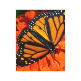 Monarch Butterfly Canvas Wrap Canvas Print