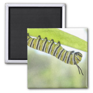 Monarch Butterfly Caterpillar Exploring A Milkweed 2 Inch Square Magnet