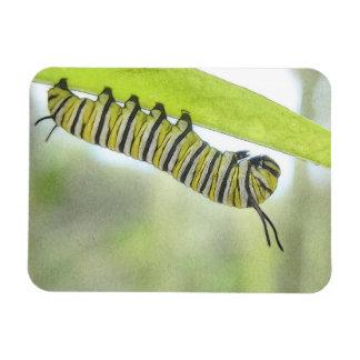 Monarch Butterfly Caterpillar Exploring A Milkweed Rectangular Photo Magnet