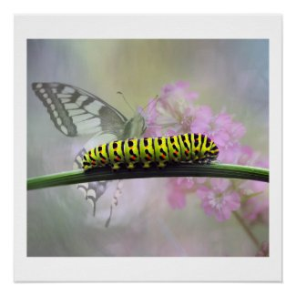 Monarch Butterfly Caterpillar Glossy Poster