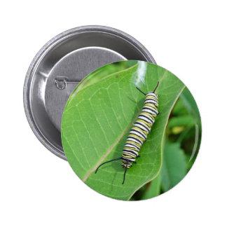Monarch butterfly caterpillar pinback button