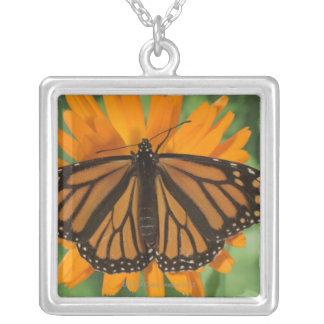 Monarch butterfly (Danaus plexippus) on pot Square Pendant Necklace