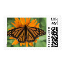 Monarch butterfly (Danaus plexippus) on pot Postage