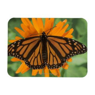 Monarch butterfly (Danaus plexippus) on pot Rectangular Photo Magnet