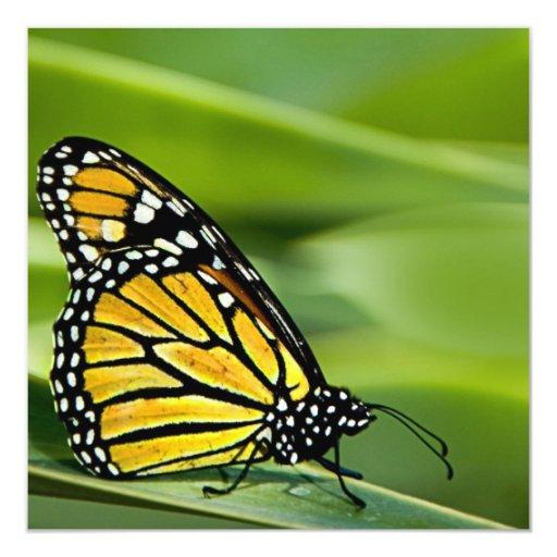 Monarch Butterfly Design Invitations