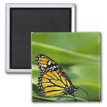 Monarch Butterfly Design Magnet Fridge Magnet