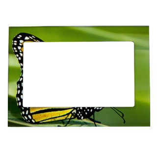 Monarch Butterfly Design Magnetic Frame