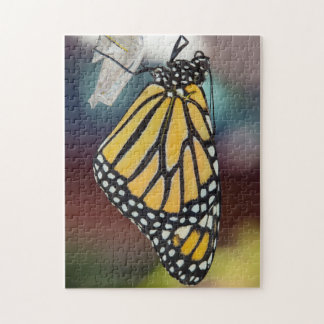 Monarch Butterfly Drying Wings Puzzle