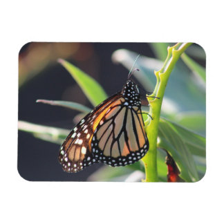 Monarch Butterfly Flexible Photo Magnet