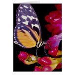 Monarch butterfly  flowers greeting card