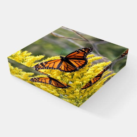 Monarch Butterfly Glass Paperweight