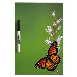 Monarch Butterfly Gradient Dry-Erase Board