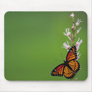 Monarch Butterfly Gradient Mouse Pad