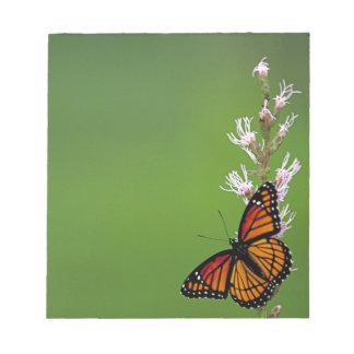 Monarch Butterfly Gradient Scratch Pad