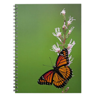 Monarch Butterfly Gradient Spiral Notebook