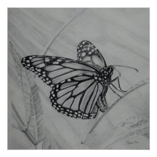 Monarch Butterfly graphite drawing Poster
