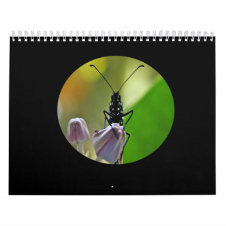 Monarch Butterfly Hawaii Calendar