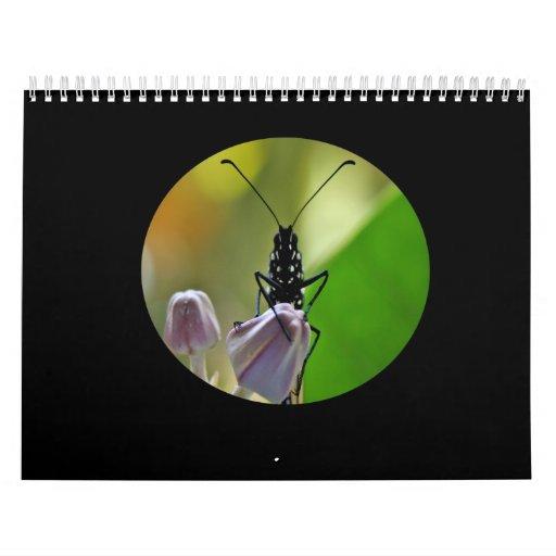 Monarch Butterfly Hawaii Calendar