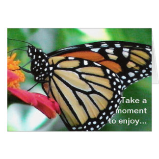 Monarch Butterfly Image for Nature Lovers Birthday Card