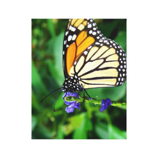 Monarch Butterfly In A Garden Canvas Print