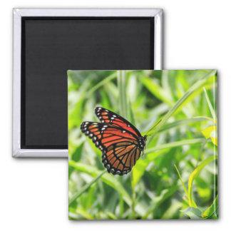 Monarch butterfly in flight magnet