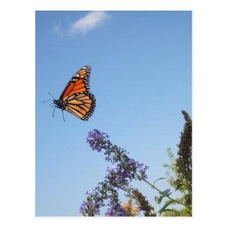 Monarch butterfly in flight postcard