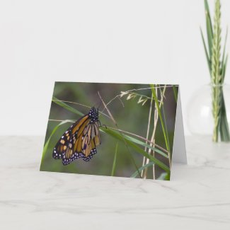Monarch Butterfly in the Grass Greeting Cards