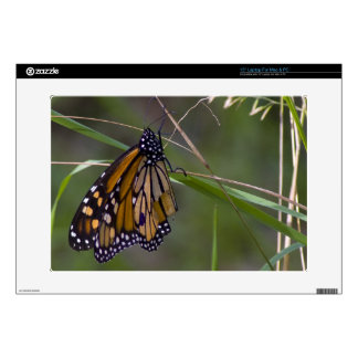 Monarch Butterfly in the Grass Laptop Decal