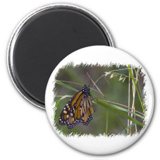 Monarch Butterfly in the Grass Magnet