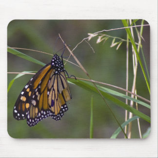 Monarch Butterfly in the Grass Mouse Pad