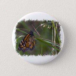 Monarch Butterfly in the Grass Pinback Button