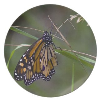 Monarch Butterfly in the Grass Plate