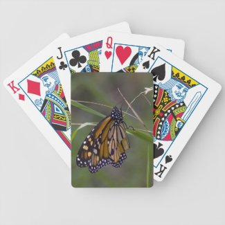 Monarch Butterfly in the Grass Playing Cards