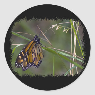 Monarch Butterfly in the Grass Round Stickers