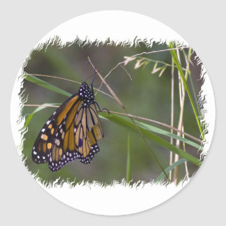 Monarch Butterfly in the Grass Stickers