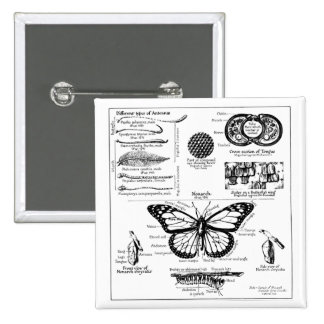 Monarch Butterfly Information Pinback Button