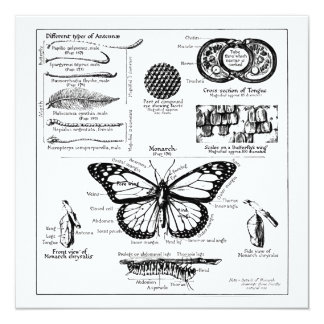 Monarch Butterfly Information Card