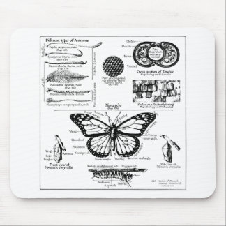 Monarch Butterfly Information Mouse Pad