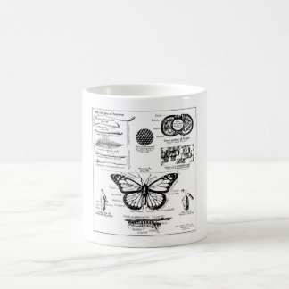 Monarch Butterfly Information Coffee Mugs