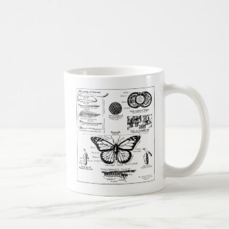 Monarch Butterfly Information Mugs