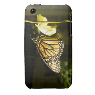 Monarch Butterfly iPhone 3 Covers